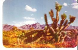 Joshua Tree On The Desert - Unclassified