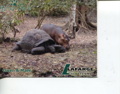 (PH 200) Kenya - Halles Parks - Tortoise And Pygmy Hippoppotamus - Kenia