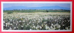 Around Town Hust - Daffodils Valley - Transcarpathia - Zakarpatie - 1983 - USSR Ukraine - Unused - Ukraine