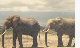 African Elephant......(scan Verso) - Éléphants
