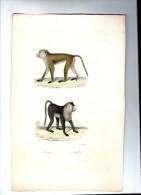 Lithographie , 27 X 18 Cm , Animaux , Singe , Macaque , Aigrette  ,   Frais Fr : 1.80€ - Lithographies