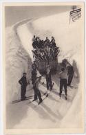 France - La Montee Du Grand Ballon - Skijoring - Ski - Cartes Postales