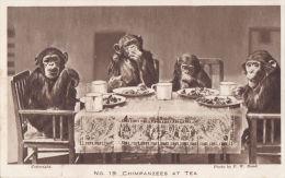 ZOO CARD - CHIMPANZEES AT TEA - Monkeys