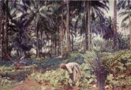 Working On The Farm, Nigeria Postcard Used Posted To UK 1960s Stamp CMS - Nigeria