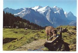 SUISSE La Montagne  Ses Pâturages  Et Sa Vache 2884 - Vaches