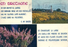 BRETAGNE - 29 - FINISTERE - Fleurs De Bretagne - Ajonc Et Bruyère - CPSM GF Couleur - Carte Multivues - Le Pouldu