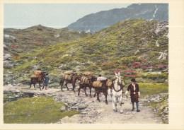 Postvervoer Zwitserland - 400 Jaar Zwitsers Vervoer - 17. Jahrhundert Saumkolonne - R3 - Ongebruikt - Post