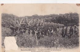 Nouvelles-Hebrides - Canaques Travaillant Sur Une Plantation - Vanuatu