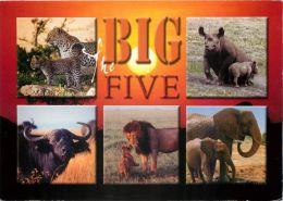Big Five Animals, Kenya Postcard Used Posted To UK 2000s Stamp - Kenya