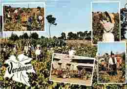 Vignes - Vendanges En Languedoc - Multivues - Machines Agricoles - Vendanges - Raisins - Vin - Voir Scans Recto-Verso - Vignes