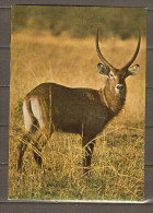 DAHOMEY    -    Faune D´ Afrique  -  Waterbuck   -  Gazelle - Dahomey
