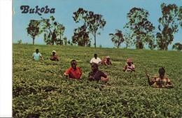 Bukoba - Oeganda