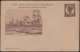 Queensland 1898. Entier Postal.  Arrowroot Drying, Coomera River. Séchage De La Maranta Arundinacea - Pollution