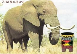 Olifant - Zimbabwe