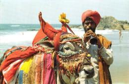 Nandi Bull - India