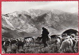 CPSM 66 PRADES Dans La Vallée De VERNET LES BAINS  Pâturages  Troupeau De Moutons   * Format CPM - Prades