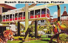 Skyrail Safari Busch Gardens Tampa Florida