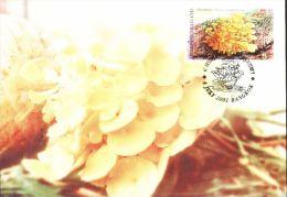 TH0820Thailand Variety Of Mushrooms 4Maximum Card - Tailandia