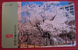 Telefonkarte Asien Japan NTT Bäume Blüten Telephone Card 1991 - Jahreszeiten