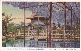 JAPAN - GREATER TOKYO, WISTERIA IN FULL BLOOM AT KAMEIDO - Tokio