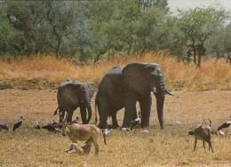 ELEPHANTS De La REPUBIQUE  Du TCHAD - Elephants