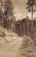 RP, Camino Al Nevado De TOLUCA, Mexico, 1930-1950s