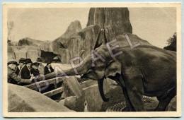 Paris (75) - Muséum D´Histoire Naturelle - Zoo Bois De Vincennes - Éléphants D´Asie - Éléphants