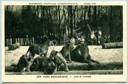 Paris (75) - Zoo Bois De Vincennes - Lions Et Lionnes - Circulé En 1931 - Lions