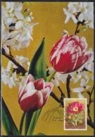 3767. Yugoslavia, 1969, Flowers - Paeonia Tenuifolia, CM - Maximumkarten