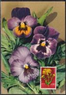 3776. Yugoslavia, 1969, Flowers - Arnica Montana, CM - Maximumkarten