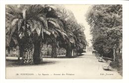 Cp, 66, Perpignan, Le Square, Avenue Des Palmiers - Perpignan