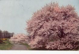P4118 Winterthur Gardens Delaware  USA Front/back Image - Autres