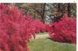 P4116 Delaware Winterhur Gardens  USA Front/back Image - Autres