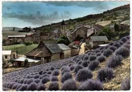 Thorame-Haute - Et Ses Lavandes - France