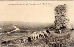 PENNE - Vue De La Plaine Du Lot - Troupeau De Moutons       (66660) - Autres Communes
