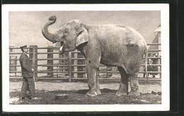 AK Wien, Schönbrunn, Menagerie, Indischer Elefant Mit Wärter - Elephants