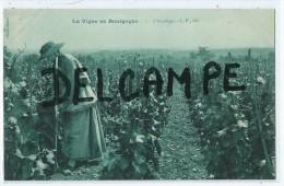 CPA -La Vigne En Bourgogne - L´Accolage- - France