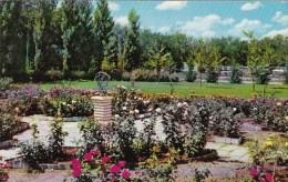 Rose Garden Elsenhower Museum Abilene Kansas