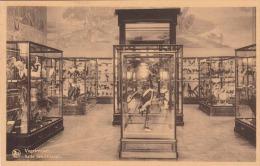 TERVUREN - Musee Du Congo Belge - Tervuren