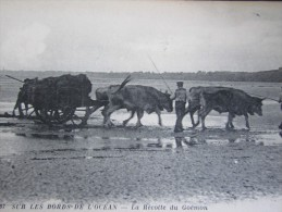 Sur Les Bords De L'océan La Récolte Du  Goémon Vendée 85 - Sables D'Olonne