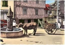 Donzenac - La Fontaine (attelage, Boeufs) - France