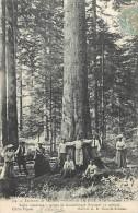 Réf : A14 -1423  : Forêt De La Joue Près De Salins  Arbre Remarquable - Francia