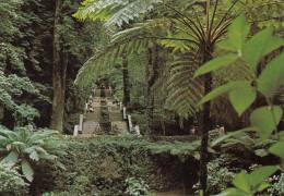 1980 CIRCA BUSSACO FLORESTA - Portugal