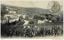 51--Avenay--Vue Prise Dans Les Vignes.animée-Dos 1900 Non Divisé-Thème Vin.Champagne - France