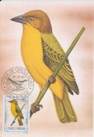 S. TOME E PRINCIPE  1983  Birds  PADE - CAMPO  Maximum Card # 55825 - Songbirds & Tree Dwellers