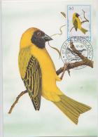 S. TOME E PRINCIPE  1983  Birds  CAMUSSELA GALO  Maximum Card # 55820 - Songbirds & Tree Dwellers