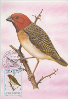 S. TOME E PRINCIPE  1983  Birds  GUNGU  Maximum Card # 55818 - Songbirds & Tree Dwellers