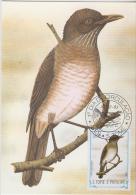 S. TOME E PRINCIPE  1983  Birds  TOLDO  Maximum Card # 55832 - Songbirds & Tree Dwellers