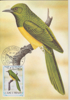 S. TOME E PRINCIPE  1983  Birds  OSSOBO  Maximum Card # 55836 - Songbirds & Tree Dwellers