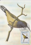 S. TOME E PRINCIPE  1983  Birds  SELELE  Maximum Card # 55834 - Songbirds & Tree Dwellers